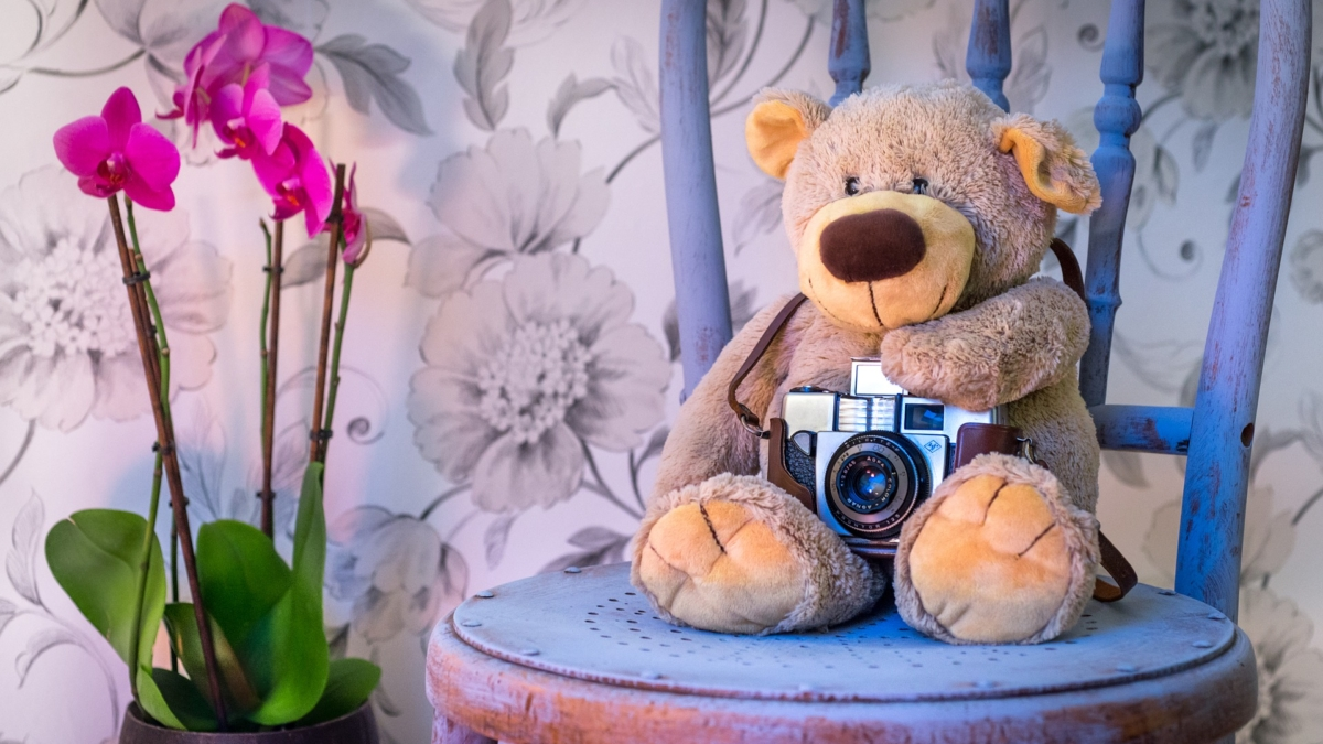 teddy-bear-1710641_1920