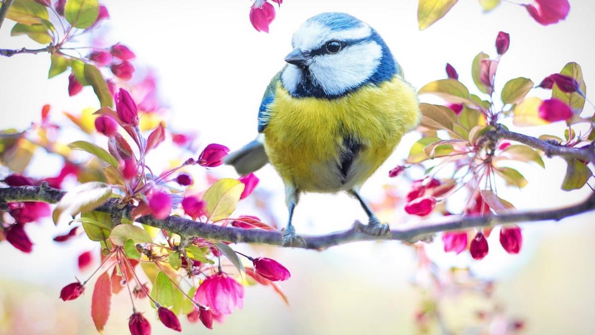 spring-bird-2295434_1920
